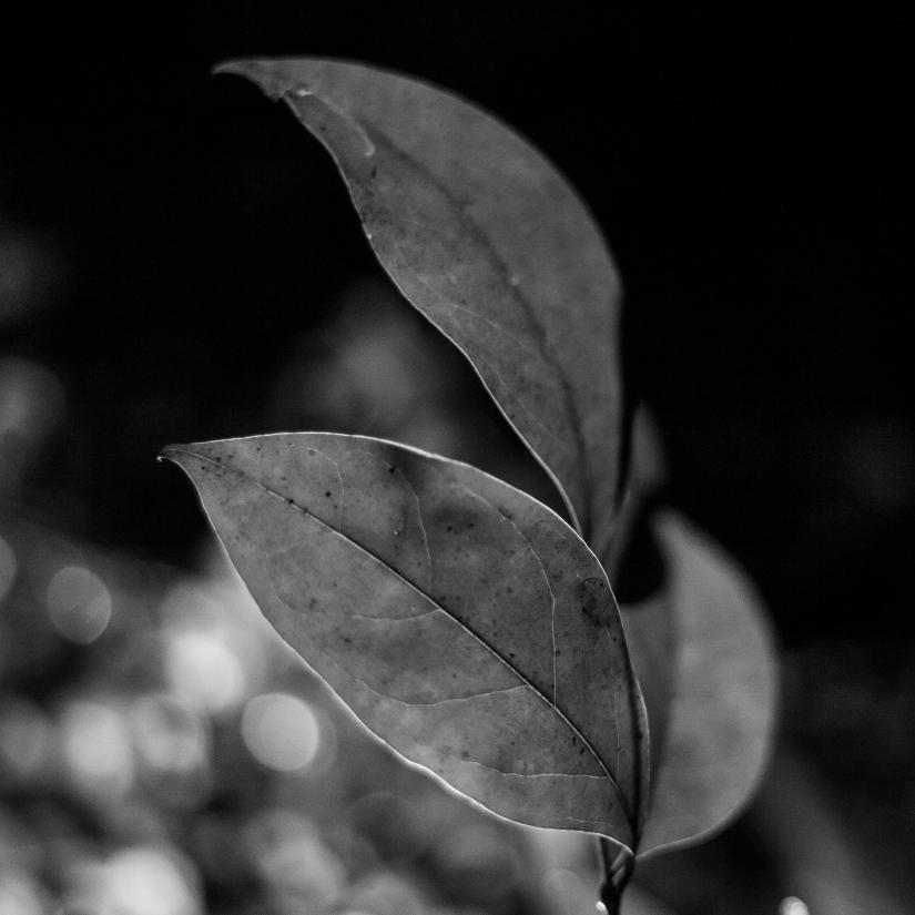 Luce e natura