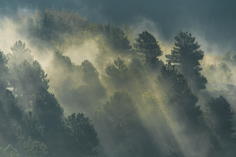 Luce tra le nebbie