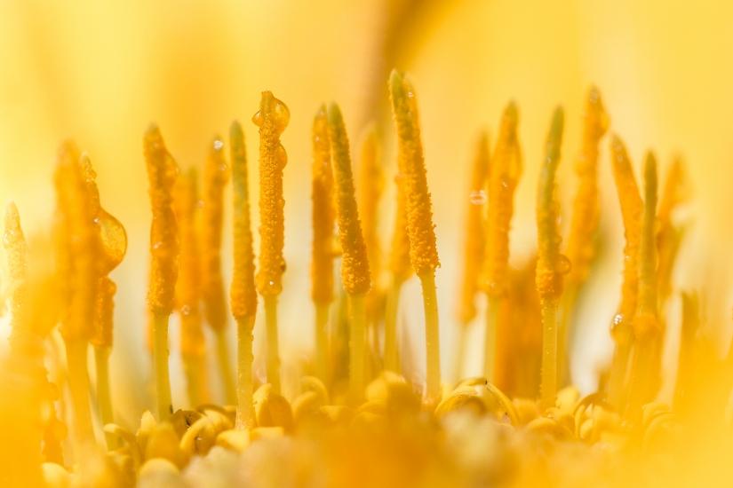Macro di fiore