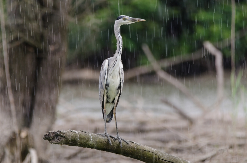 ''Maledizione piove''