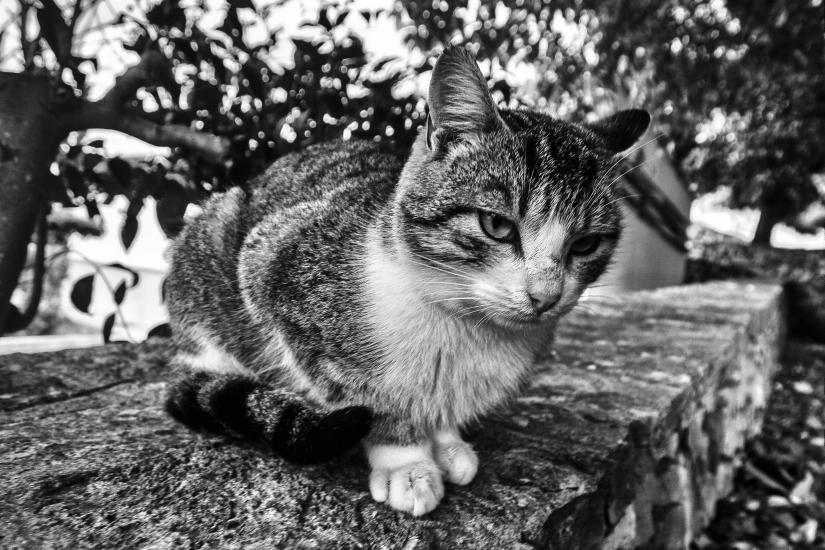 'Miao'