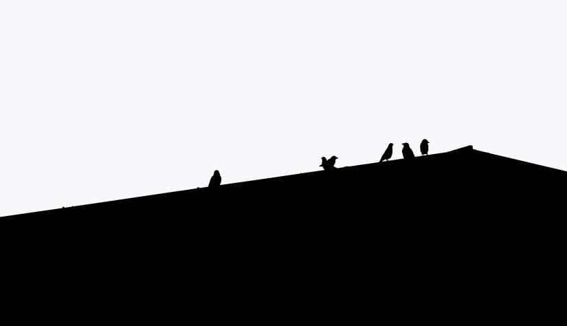 Minimal: Il gruppo
