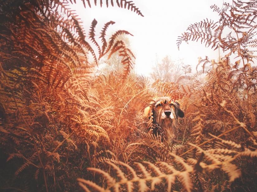 Missione: Smartphone photography - Piccola tigre