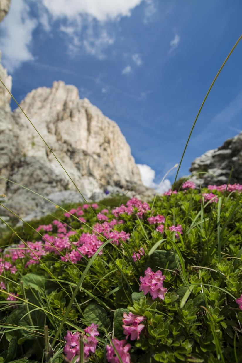 Montagna in fiore