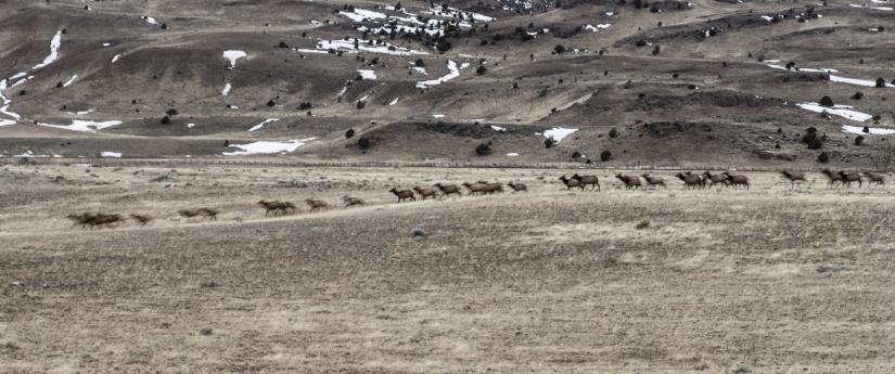 Natura selvaggia del parco di Yellowstone