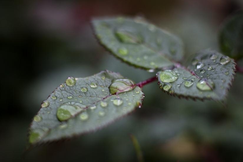 Natura, vita colori e profumi