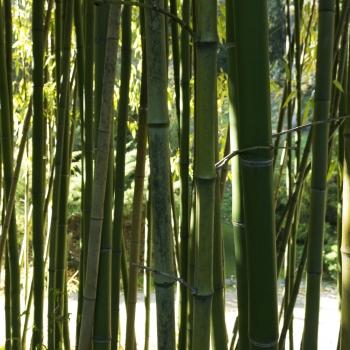 Nature- Bambù