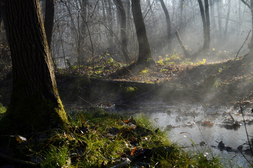 Nebbiolina tra gli alberi