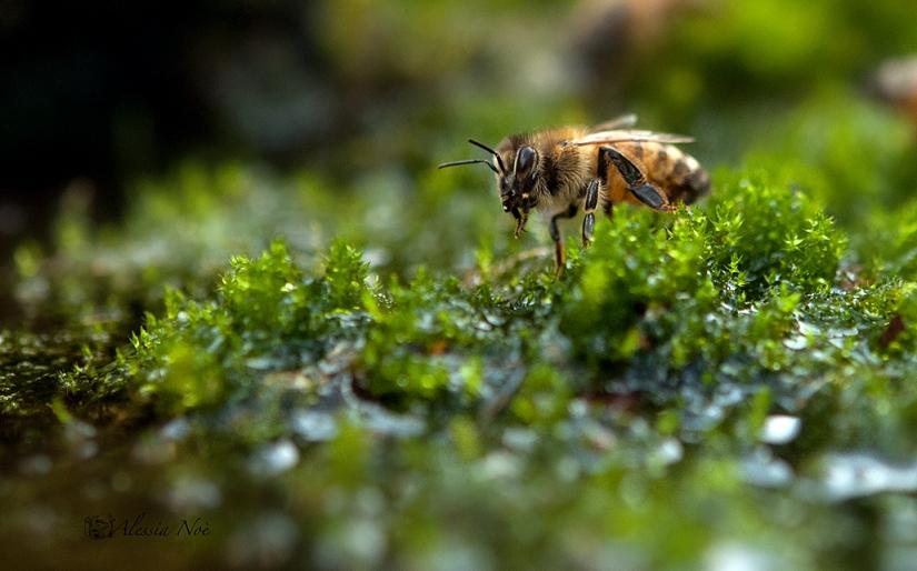Nel piccolo mondo dell'ape