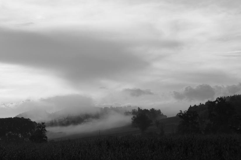 Nella nebbia......
