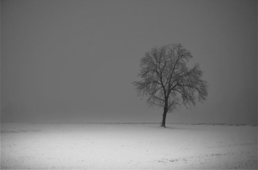 Neve In Bianco E Nero Sprea Fotografia