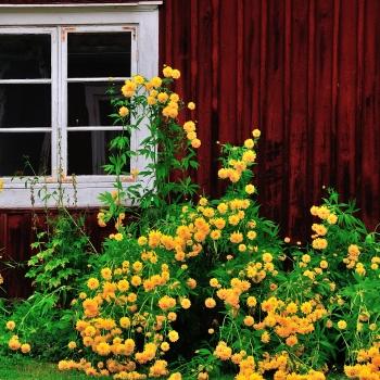 Nora, fioritura estiva