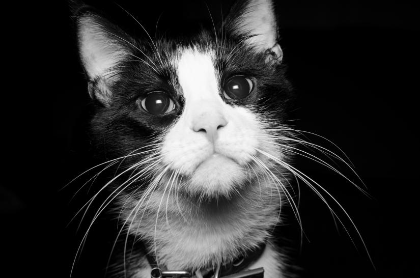 Occhi felini