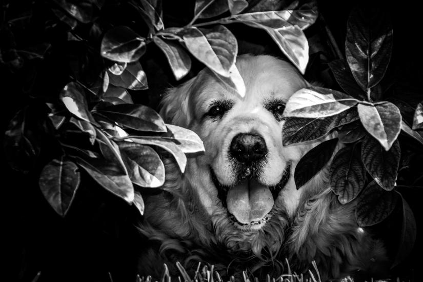 Paco, vita da cane