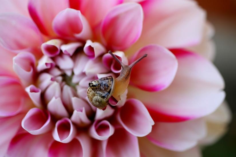 Passeggiando tra i petali