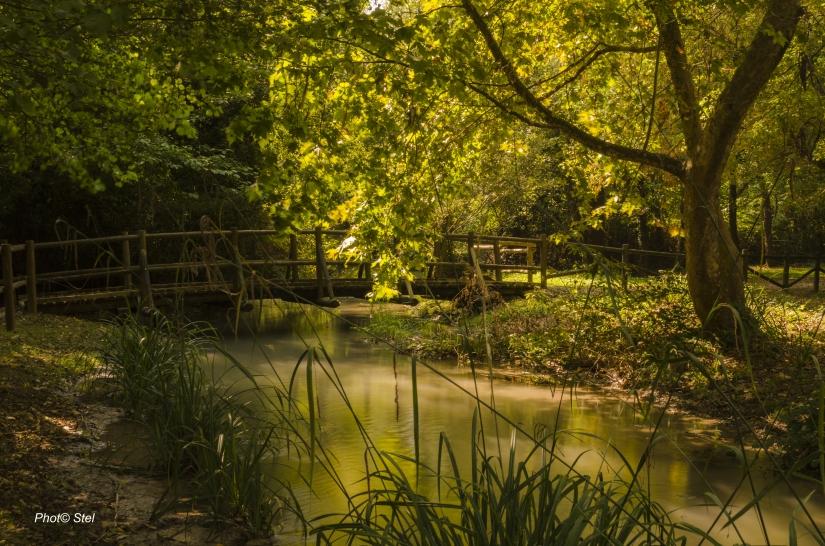 Passeggiata romantica del bosco