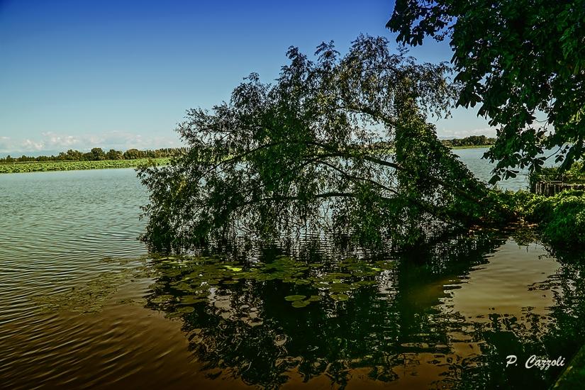 Pianta in Acqua