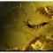 Piccoli gioielli conservati in ambra