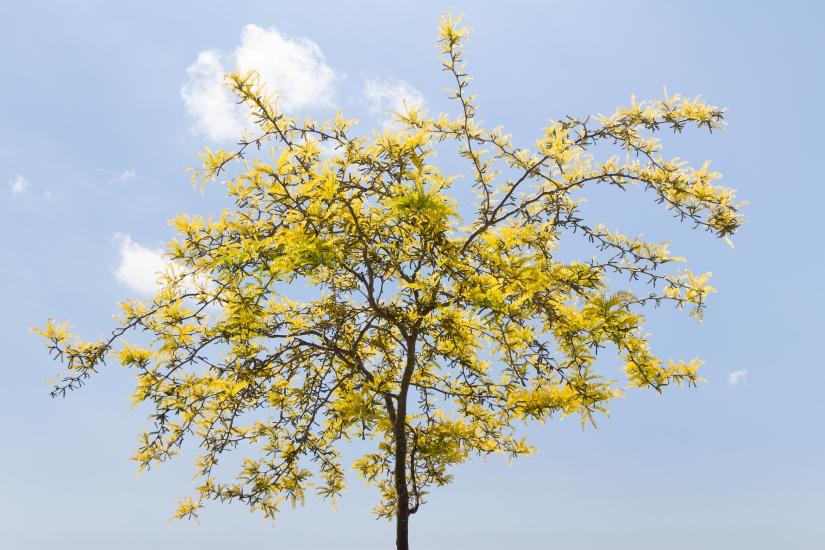 Piccolo, grande albero