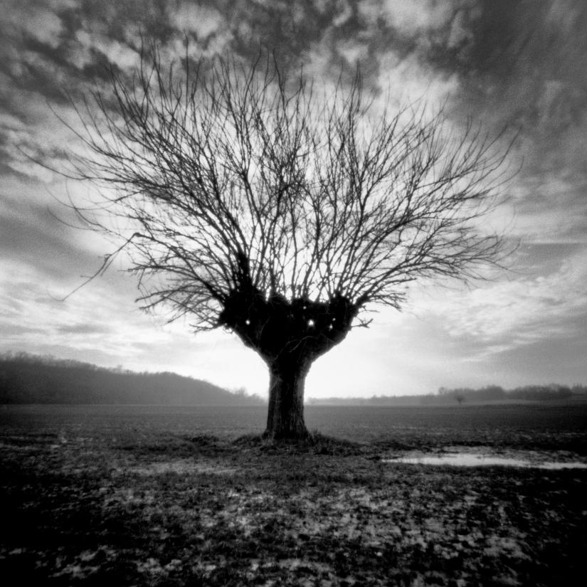 Pinhole Trees