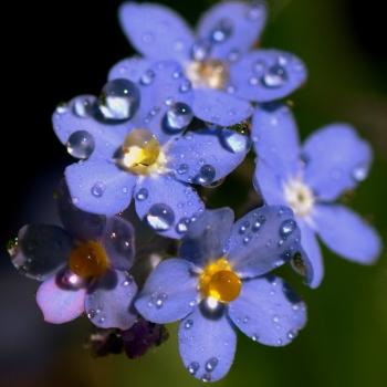 Pistils rain- non ti scordar di me