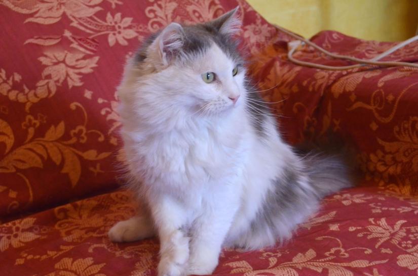 Profilo di un gatto