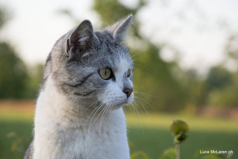 Profilo felino