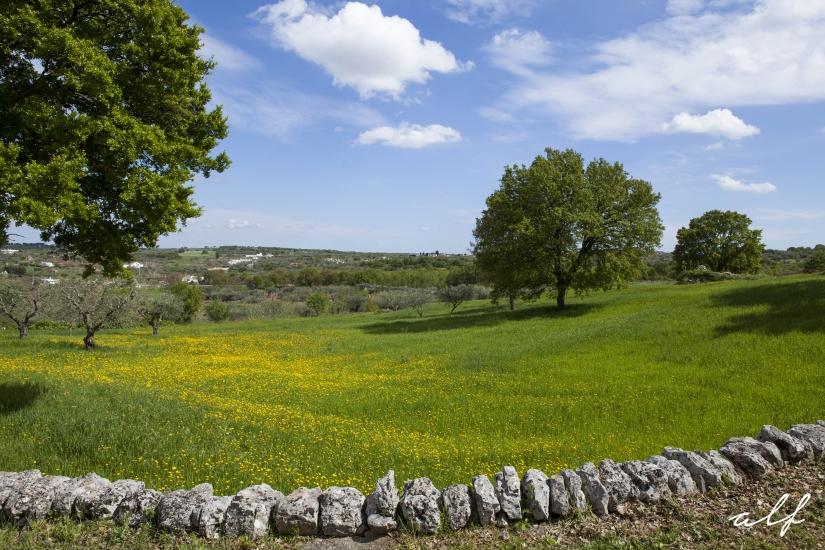 Puglia Landscape