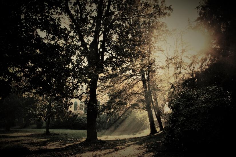 Raggi nel parco