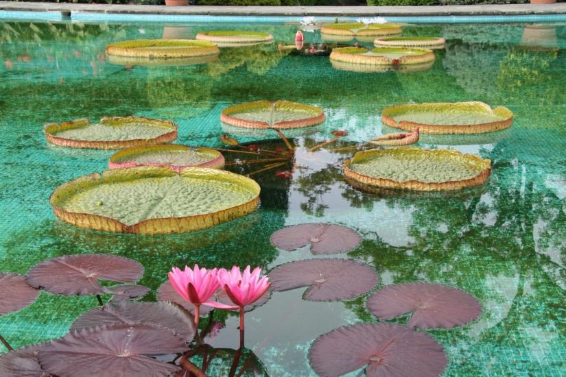 Ricordando Monet