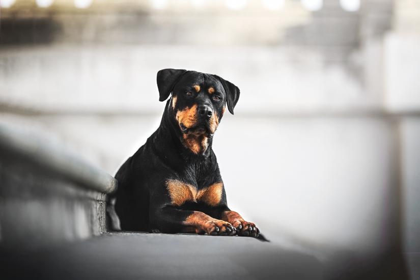 Ritratto ambientato con cani!