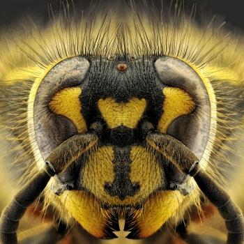 Ritratto di vespa