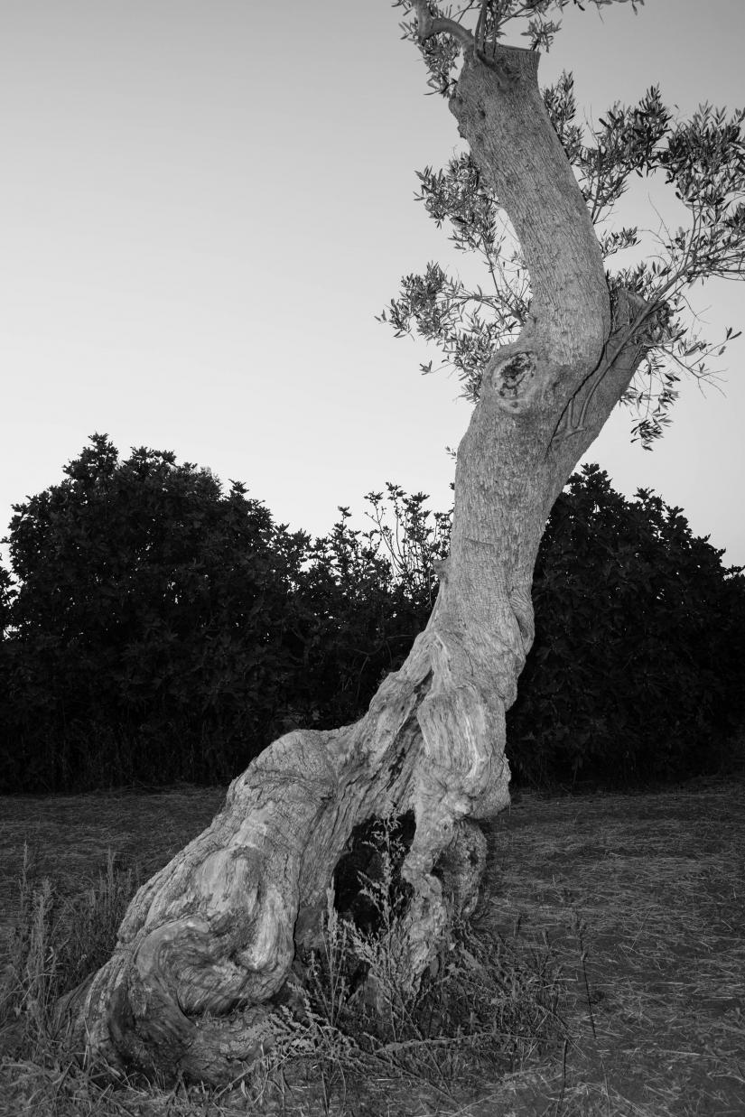 Salento - La Caduta dei giganti