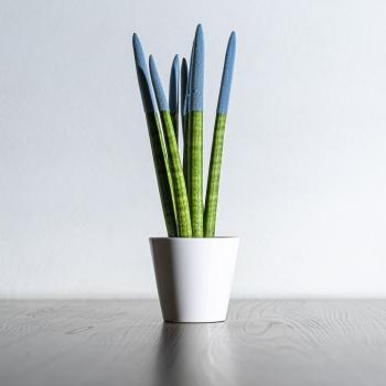 Sansevieria Cylindrica Velvet
