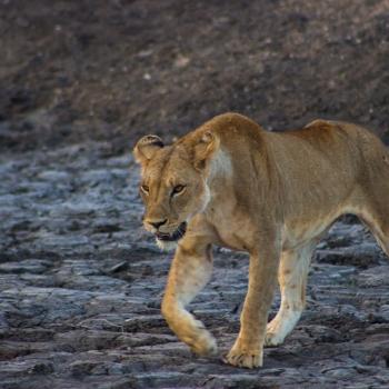 Savana wild life
