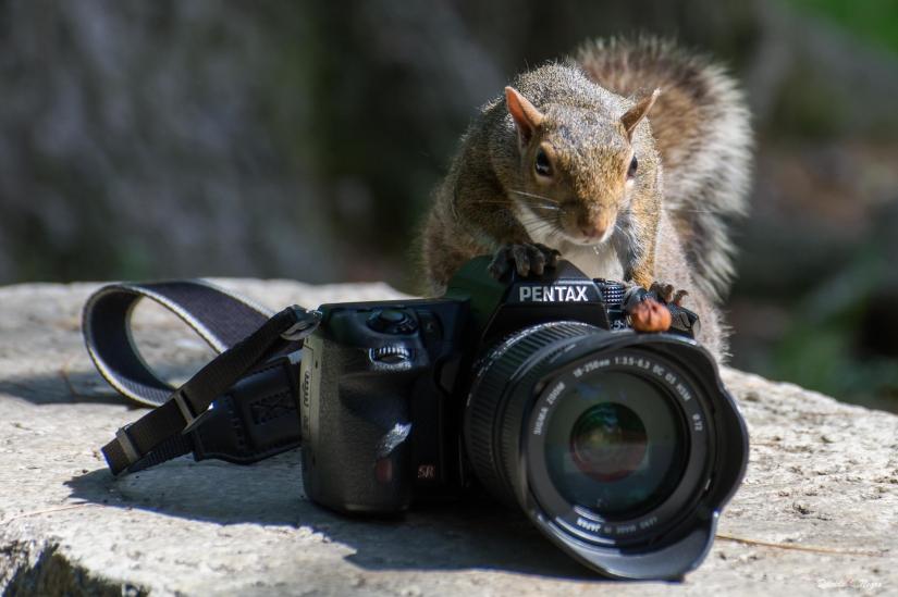 Scoiattolo fotografo
