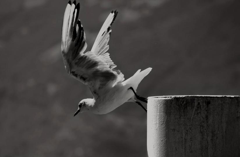 Seagull departure