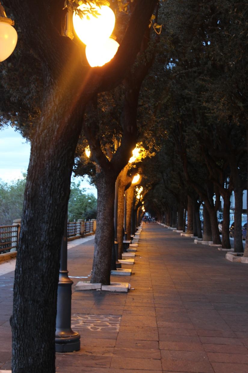 Serie di alberi sul lungo mare di Taranto