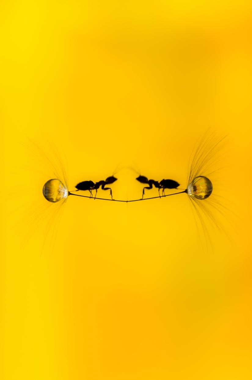 Silhouette su specchio d'acqua - Ant Adventure