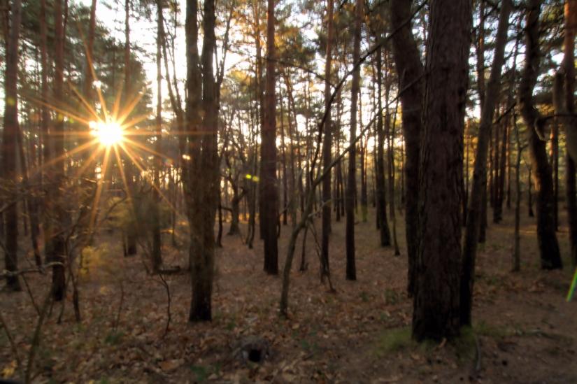 Sole  tra gli nel  bosco
