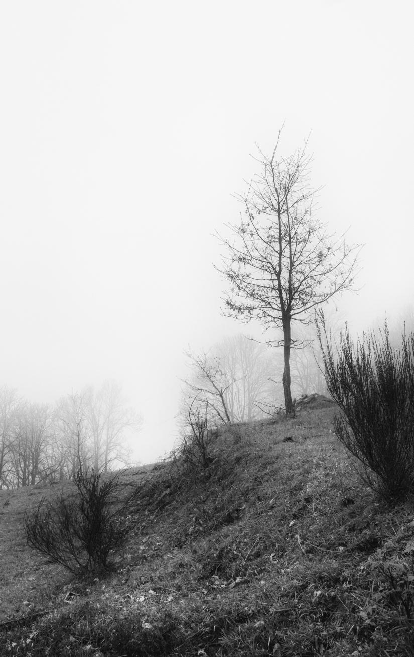 Solo nella nebbia