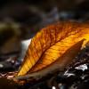 sottobosco d'autunno