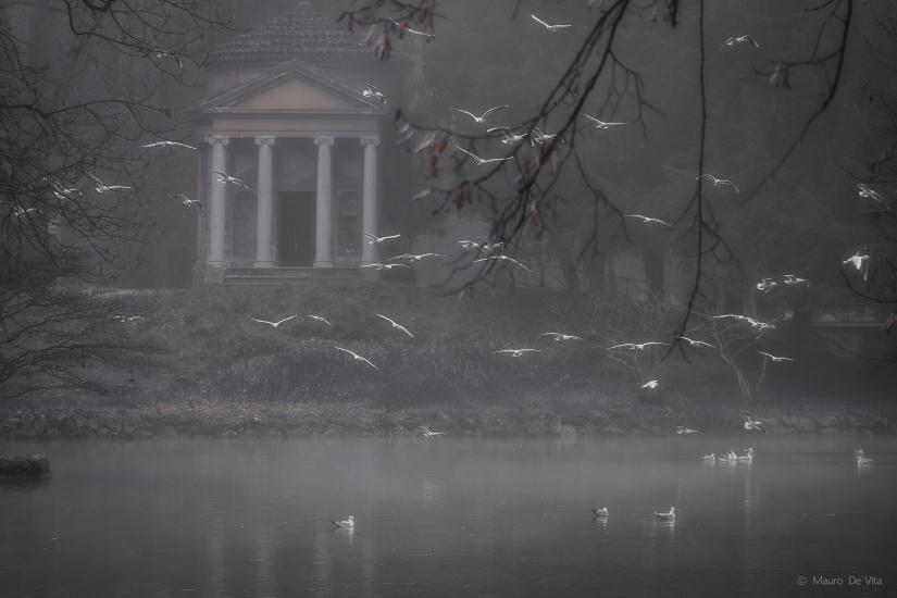 Stormo di colombe nella nebbia
