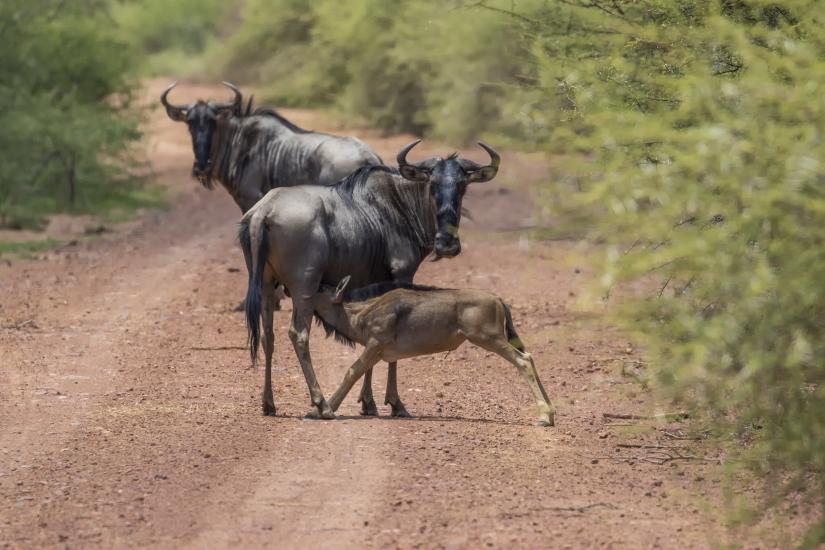 Story Telling Marataba National Park