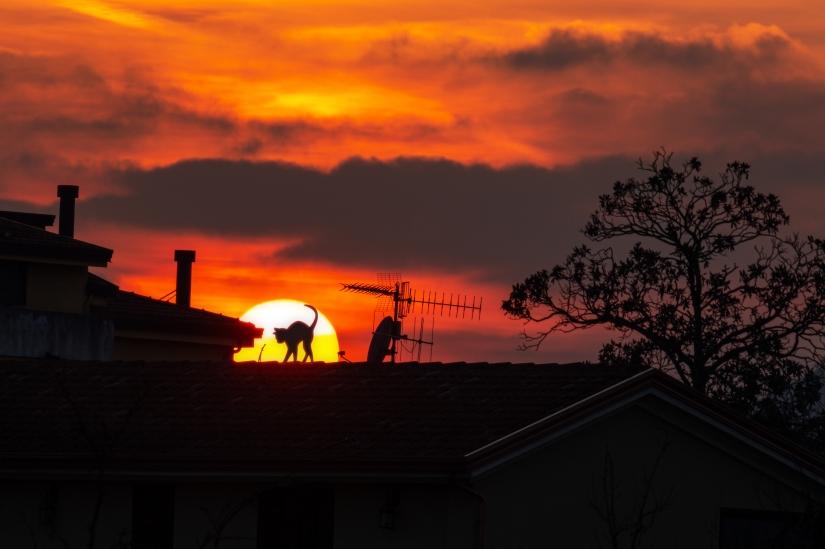 Sun cat roof