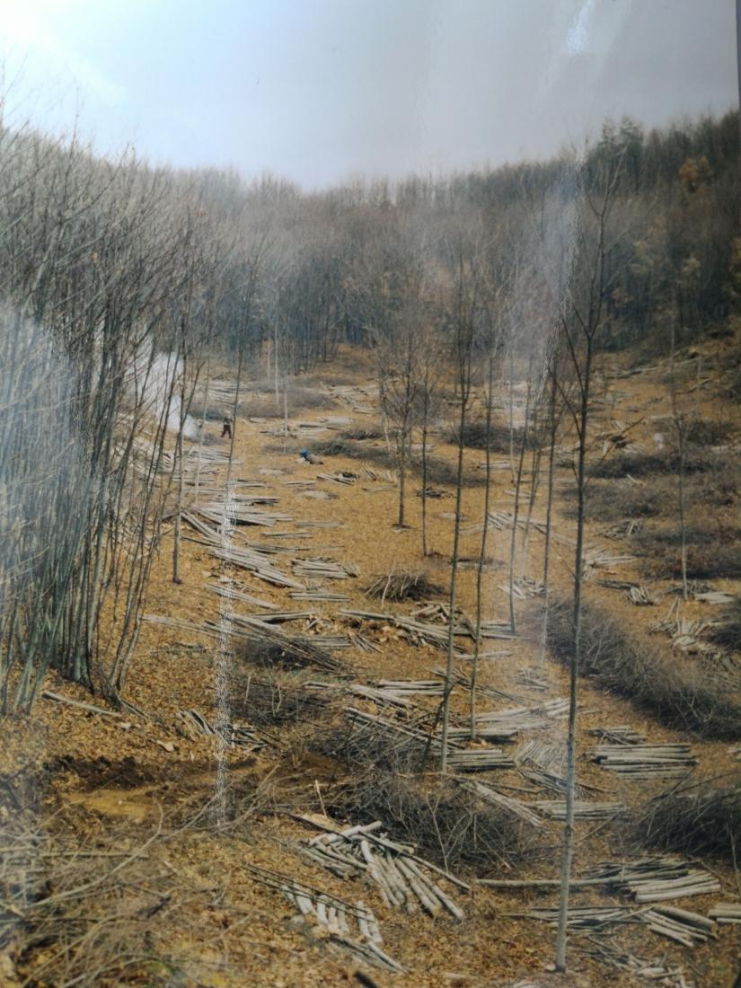 Taglio del bosco