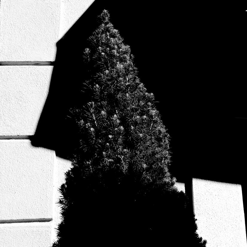 Taglio di ombre