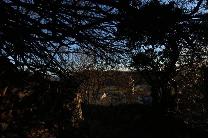 Tramonto degli alberi viventi