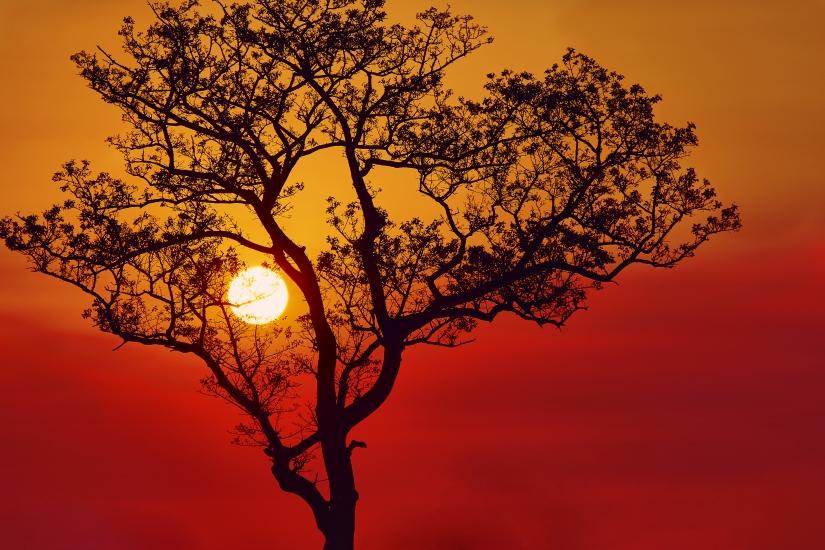 Tramonto di fuoco al Parco Kruger , Sud Africa