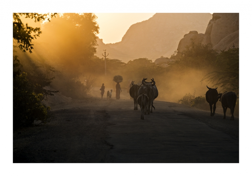 Tramonto in Rajasthan